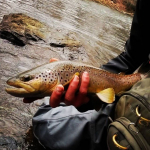 Pennsylvania trout fishing the little schuylkill with Top Water Trips FIshing Charter in Pennsylvania