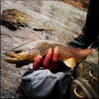 Tulpehocken Creek Fly Fishing Guided Trips with Top Water Trips