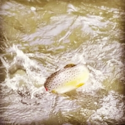 Fly Fishing Guided Trips on the Manatawny for Brown Trout