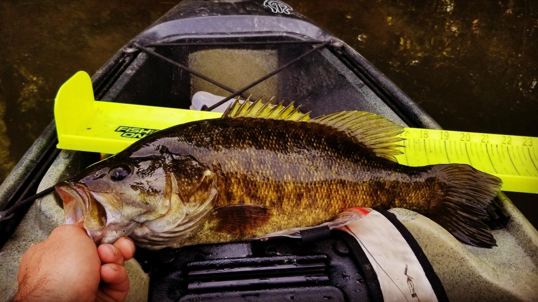 Schuylkill River Fishing Tips