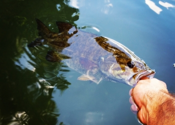 Schuylkill River Smallmouth Fishing with Top Water Trips