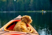 Top Water Trips Pet & Paddle Kayak Rental   Dog Paddling   Paddle with your Pet