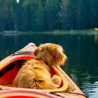 K-9 Kayaking with Top Water Trips Pet & Paddle Kayak Rental | Dog Paddling | Paddle with your Pet